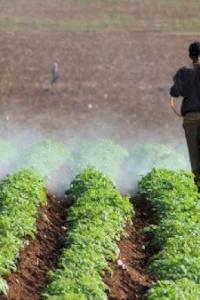 مبيدات مسرطنة لم تحظر فلسطينيا.. المبيدات الزراعية في الأغوار بلا حسيب أو رقيب