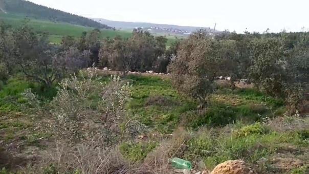 """""""أمان"""" يطالب بالتحقيق في ادعاءات الاستيلاء على أراضي الدولة"""